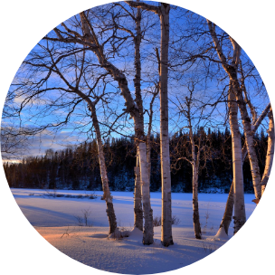 Snowy scene in Quebec, Canada, with deciduous trees in the forefront and large Canadian trees in the distance.